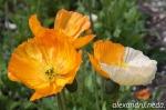 Mutant flower :)