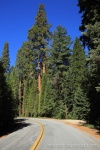 Entering Sequoia National Forest, CA