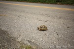 Greece is the land of turtles :)